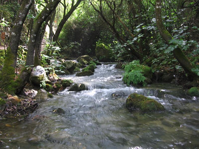 Sierra de cadiz blog de acento rural - Casas rurales en el bosque cadiz baratas ...